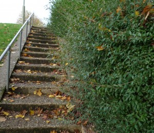 Steps from Camelot Close in November